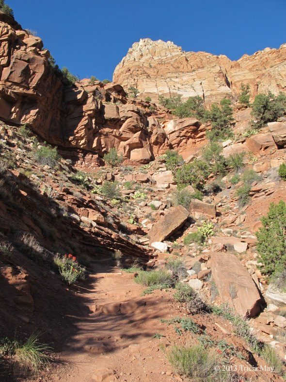 Rocky path up the Watchman Trail
