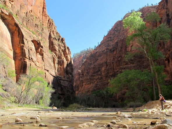 Looking up along the Virgin River on the Riverside Walk