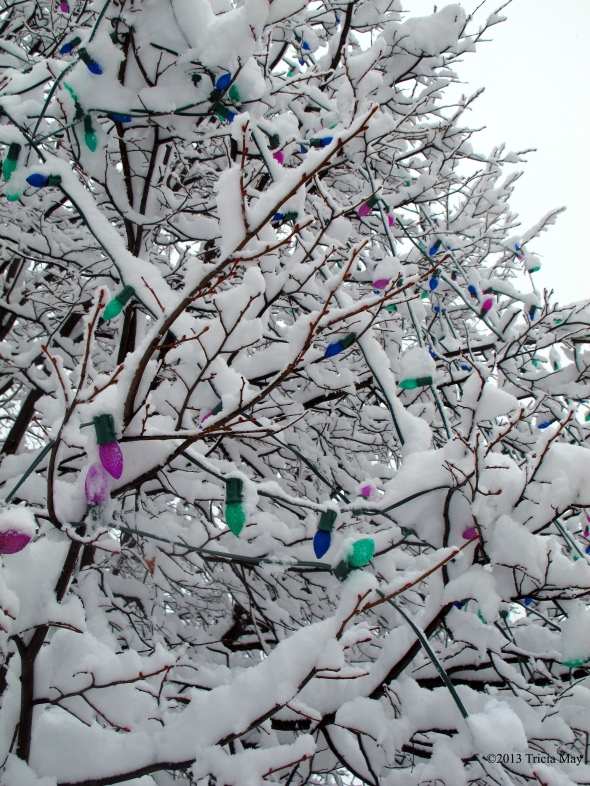 Coloured lights in a tree