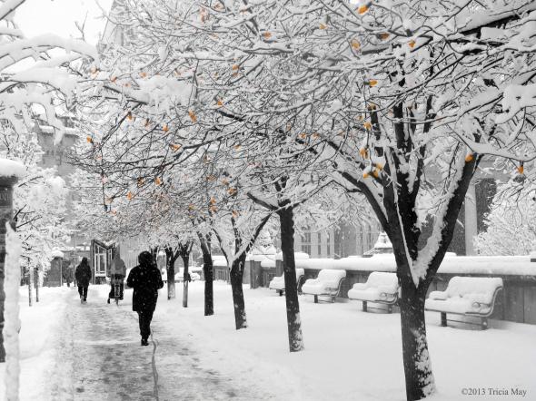 Walking along Elgin Street