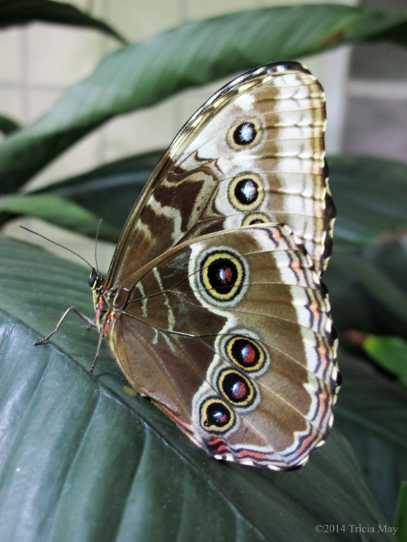 The Butterfly Conservatory - American Museum of Natural History