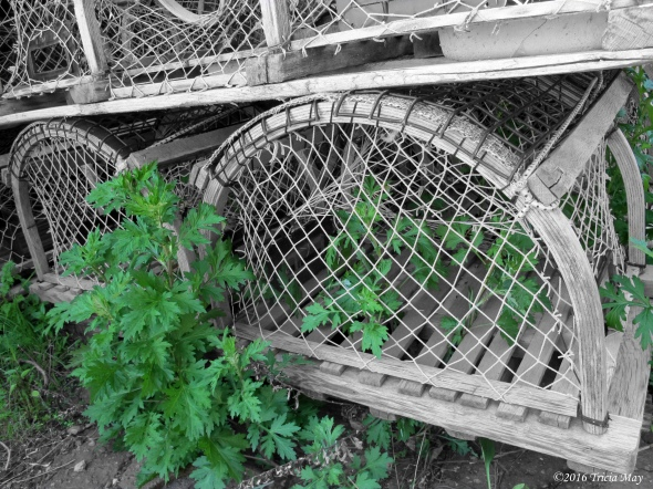 lobster-trap-with-greenery-bw-colour